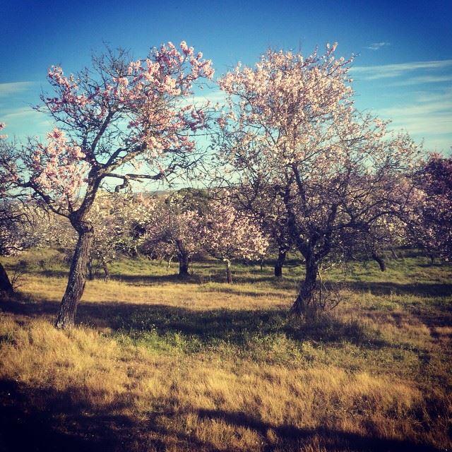 primavera en Cáceres